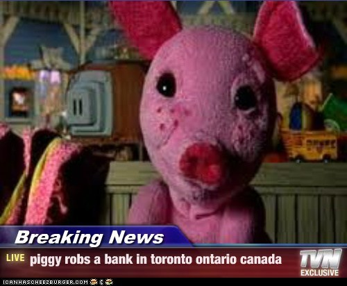 Breaking News - piggy robs a bank in toronto ontario canada