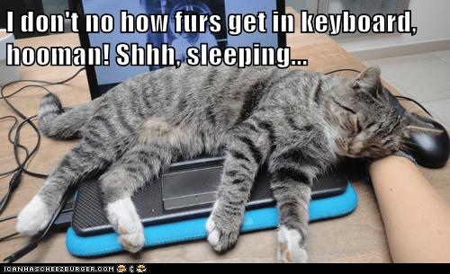 I don't no how furs get in keyboard, hooman! Shhh, sleeping...