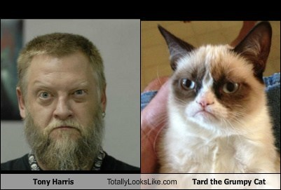 Tony Harris Totally Looks Like Tard the Grumpy Cat
