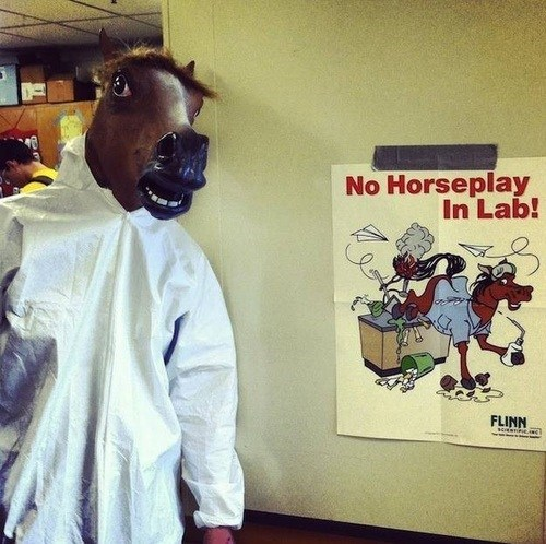 horseplay,in class,the lab,horse head,Chemistry