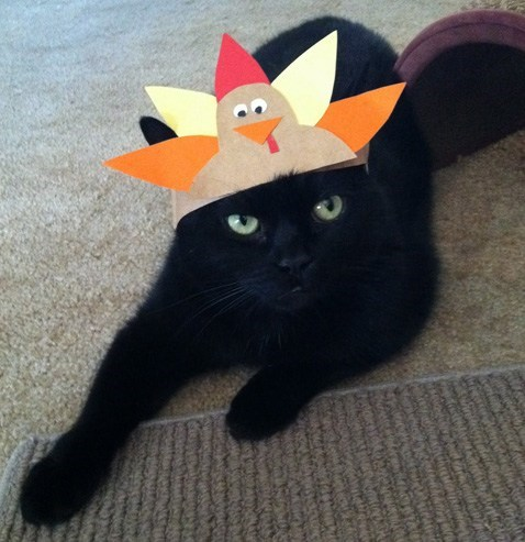 Thanksgiving Kitteh of teh Day: I Only Put Up With This Because Later You're Feeding Me Turkey