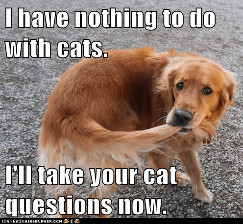 I have nothing to do with cats.   I'll take your cat questions now.