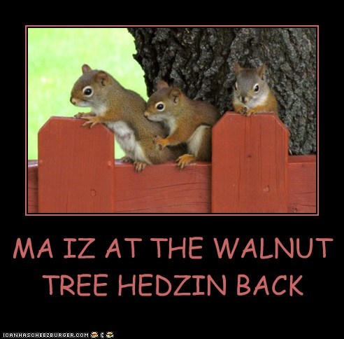 MA IZ AT THE WALNUT TREE HEDZIN BACK