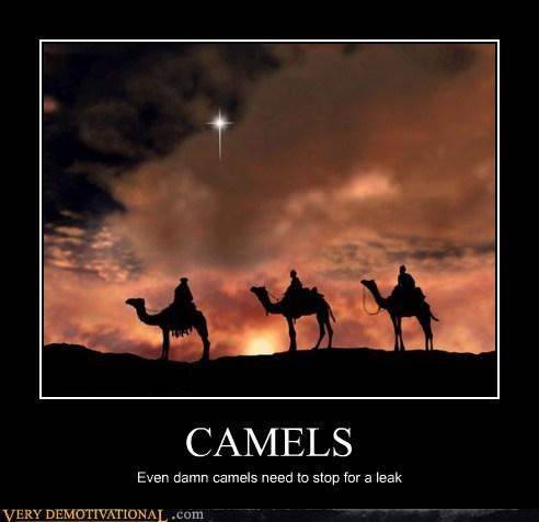 camel,pee,wisemen