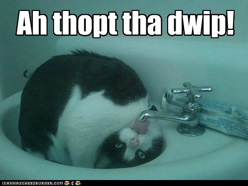 water,captions,sink,bathroom,faucet,Cats