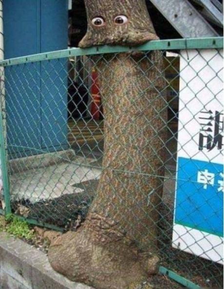 shopped pixels,om nom nom,fence,tree,eating