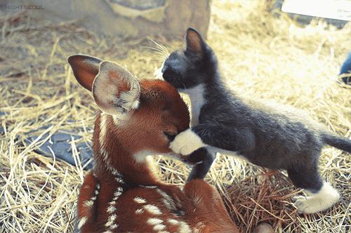 Cyoot Kitteh of teh Day: Ai Lubbs U, Bambi!