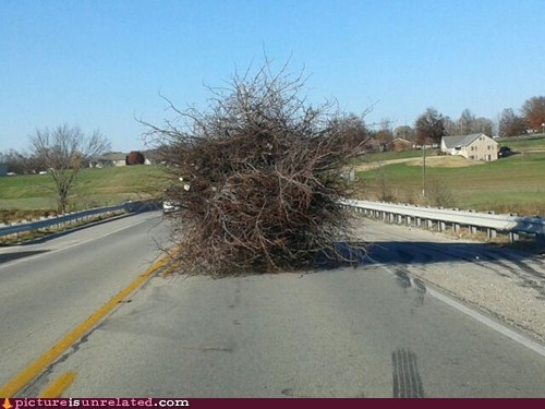 I HATE It When Trees Drive Left of Center!
