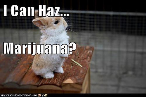 I Can Haz... Marijuana?