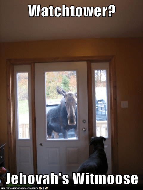 Jehovah's Witmoose
