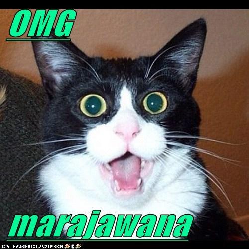 OMG  marajawana