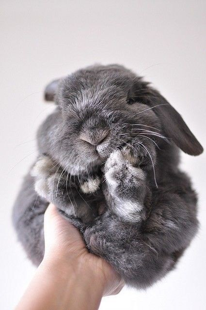 Bunday: Made of Fluffier Stuff
