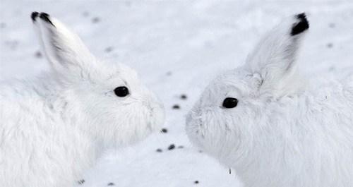 Bunday: Winter Camouflage