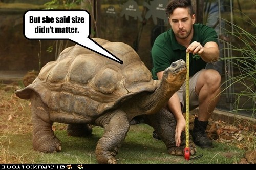 insecure,matters,measuring,size,turtle