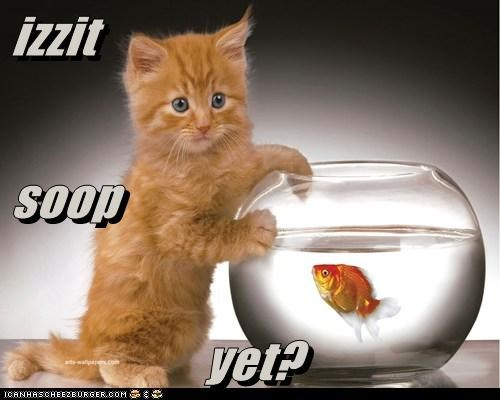 izzit soop yet?