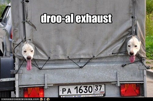 dogs,car,tongue,head out the window,exhaust,truck,what breed