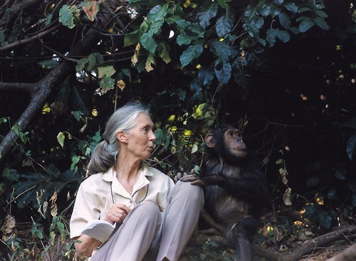 Jane Goodall With a Chimp
