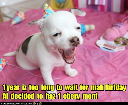 yawn,dogs,birthday,puppies,celebration,Party,what breed,hat