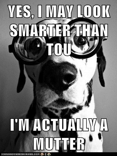 YES, I MAY LOOK SMARTER THAN TOU  I'M ACTUALLY A MUTTER