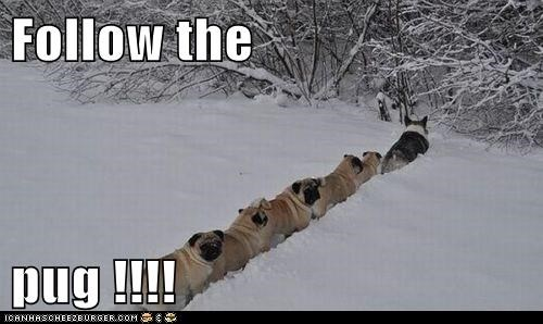 Follow the  pug !!!!