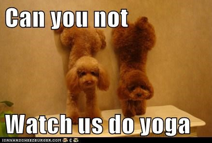 Can you not  Watch us do yoga