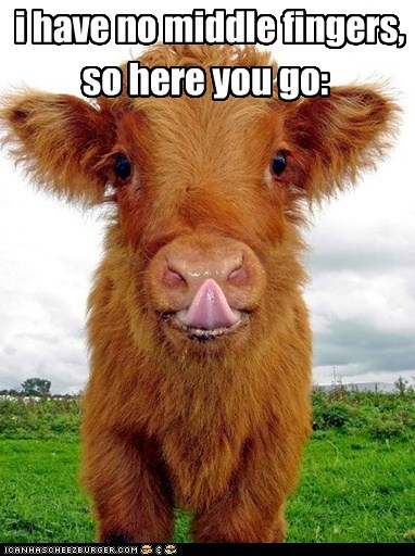 I'm Not in a Good Moo