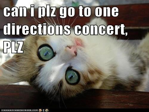 can i plz go to one directions concert, PLZ