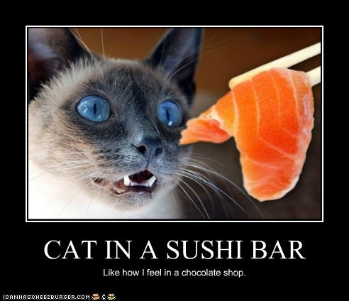 CAT IN A SUSHI BAR