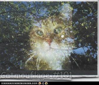 Catmouflage #101