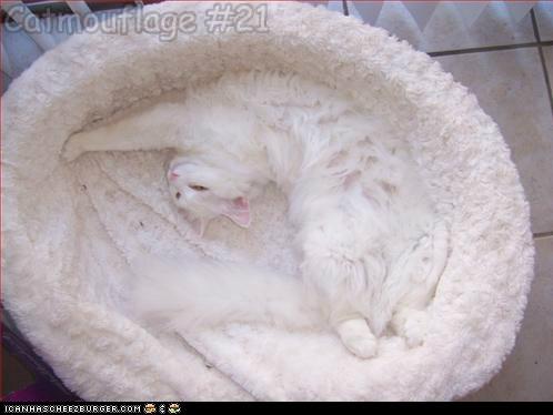 Catmouflage #21