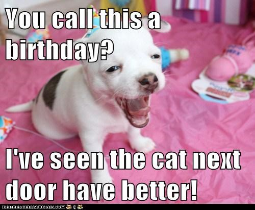 You call this a birthday?  I've seen the cat next door have better!
