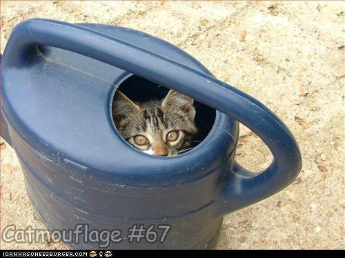 Catmouflage #67