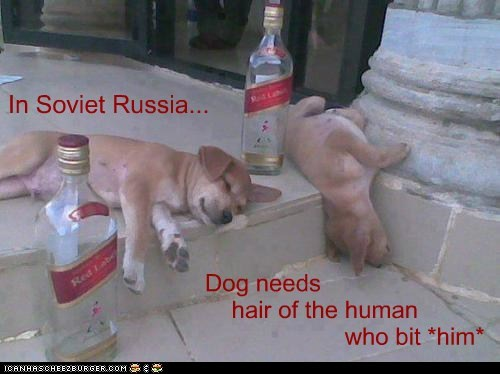 dogs,hair of the dog,puppies,in soviet russia,hang over,vodka