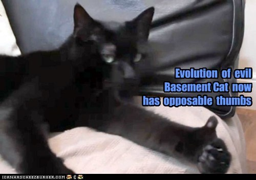 Evolution  of  evil Basement Cat  now   has  opposable  thumbs