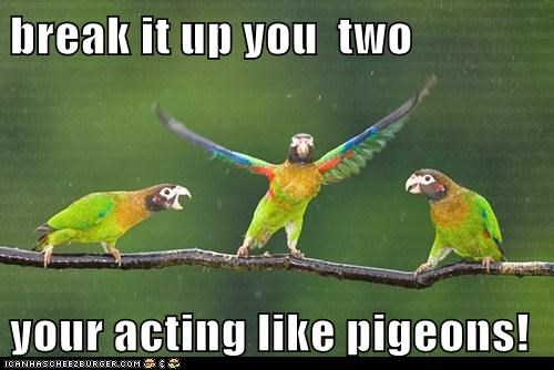 break it up you  two  your acting like pigeons!