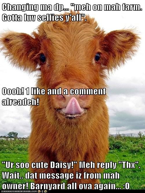 "Changing ma dp... ""meh on mah farm. Gotta luv selfies y'all"". Oooh! 1 like and a comment alreadeh! ""Ur soo cute Daisy!"" Meh reply ""Thx"". Wait.. dat message iz from mah owner! Barnyard all ova again... :O"