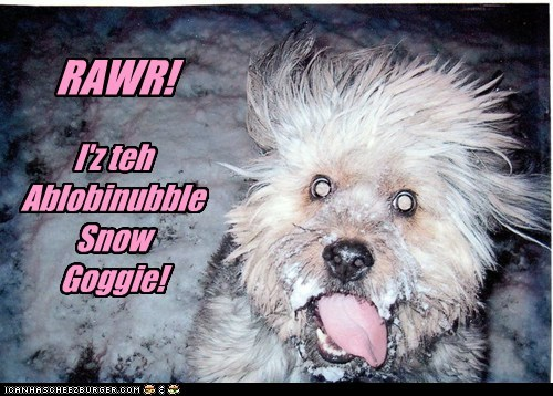 dogs,yeti,abominable snowman,snow,what breed,frost
