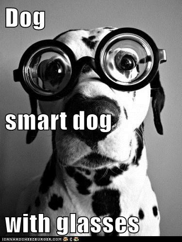 Dog smart dog with glasses