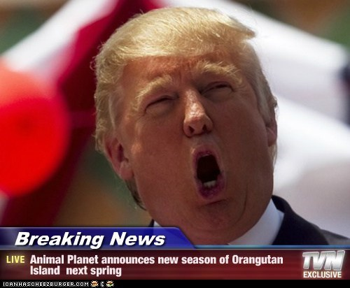 Breaking News - Animal Planet announces new season of Orangutan Island  next spring