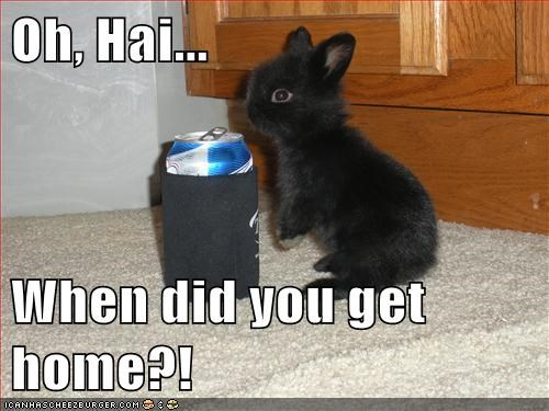bunnies,beer,drinking,baby,o hai,home,rabbits