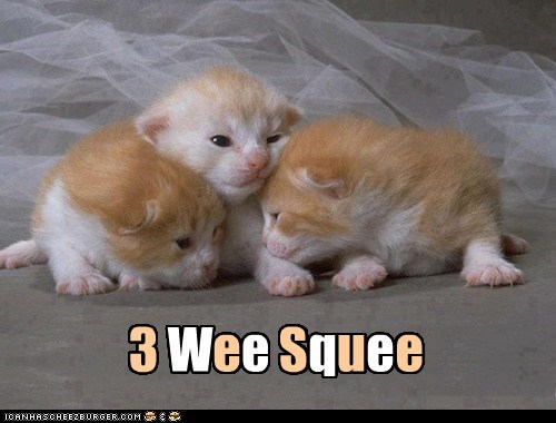 3 Wee Squee