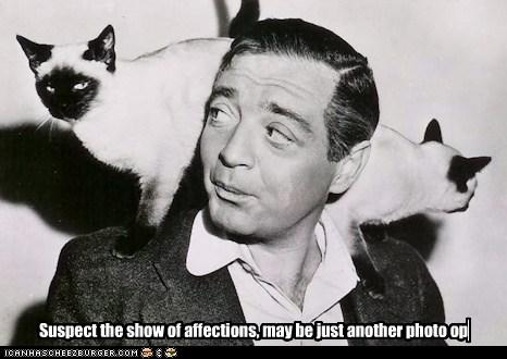 Peter Lori's Cats