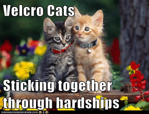 Velcro Cats