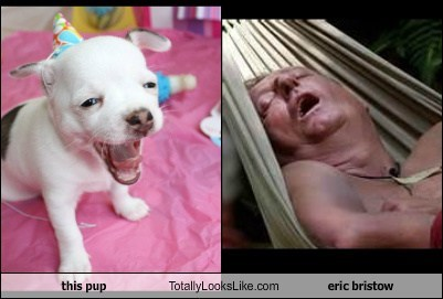 this pup Totally Looks Like eric bristow
