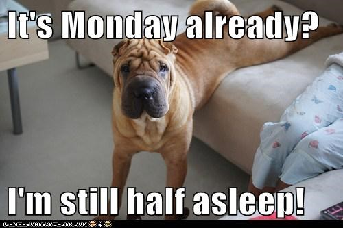 It's Monday already?  I'm still half asleep!