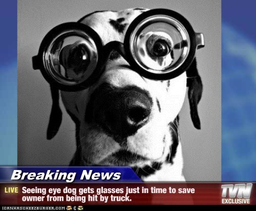 Breaking News - Seeing eye dog gets glasses just in time to save owner from being hit by truck.