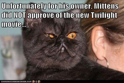 Unfortunately for his owner, Mittens did NOT approve of the new Twilight movie...
