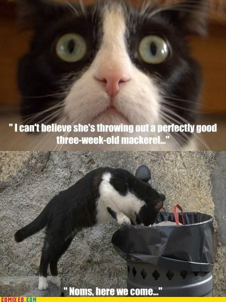 cat,pets,mackerel,noms,fish