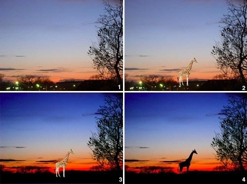 africa,photography,giraffes,landscape