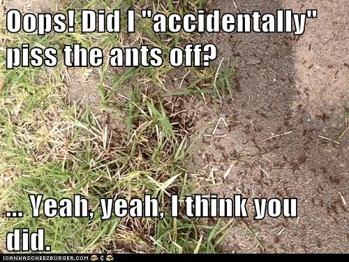"Oops! Did I ""accidentally"" piss the ants off?  ... Yeah, yeah, I think you did."